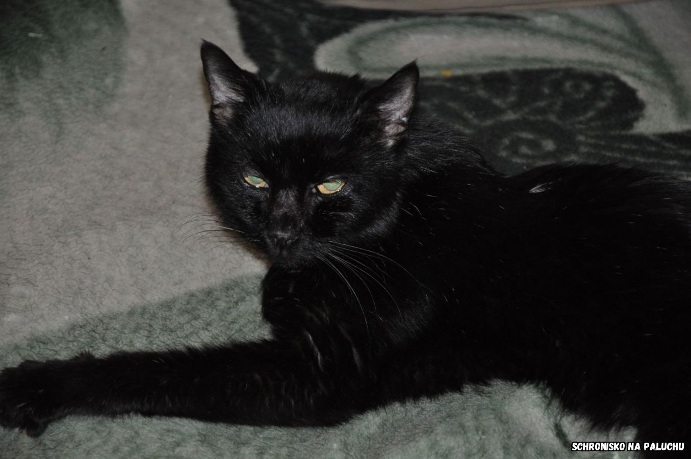 Spyrka 0001/21 - samica, 15 lat