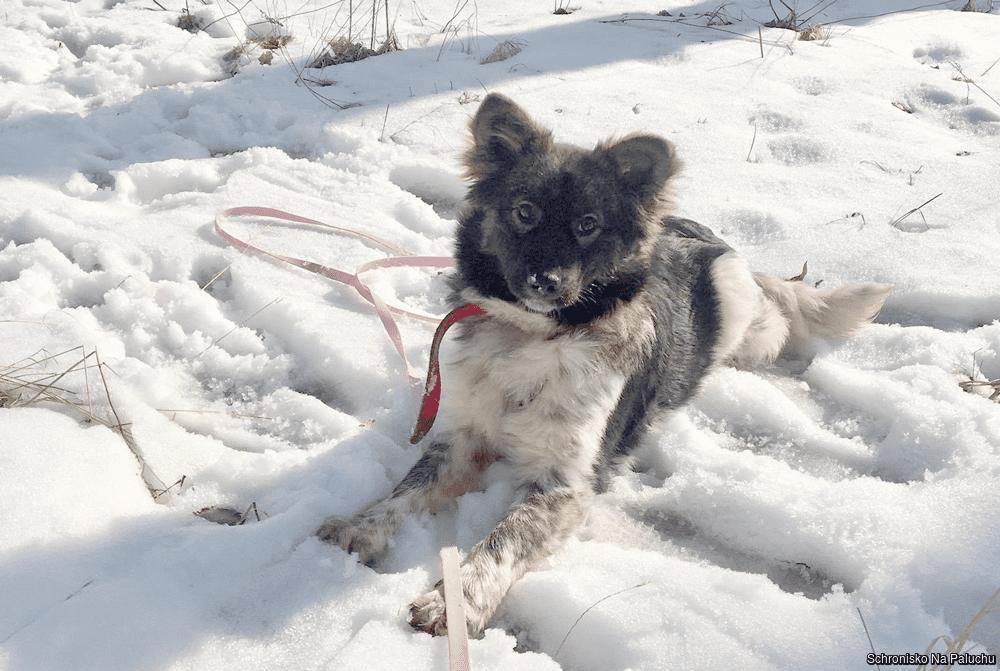 Mimi 0209/21 - samica, 7 miesięcy