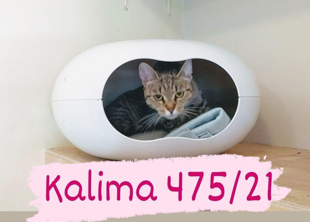 Kalima 0475/21