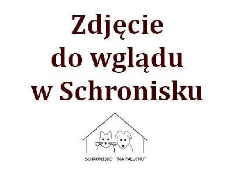 1300/20 Warszawa, Ochota